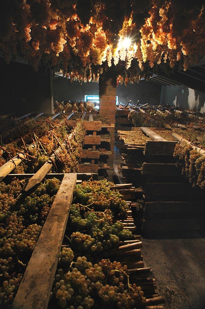 Azienda Agricola Tollena San Gimignano